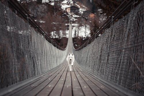 Ảnh lưu trữ miễn phí về ánh sáng, cầu, chó, chó hoang