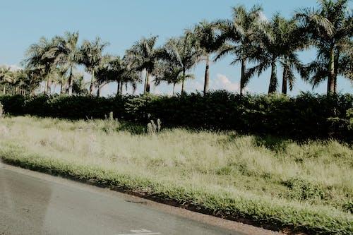 Gratis stockfoto met 4k achtergrond, 4k bureaublad, bladeren, bomen