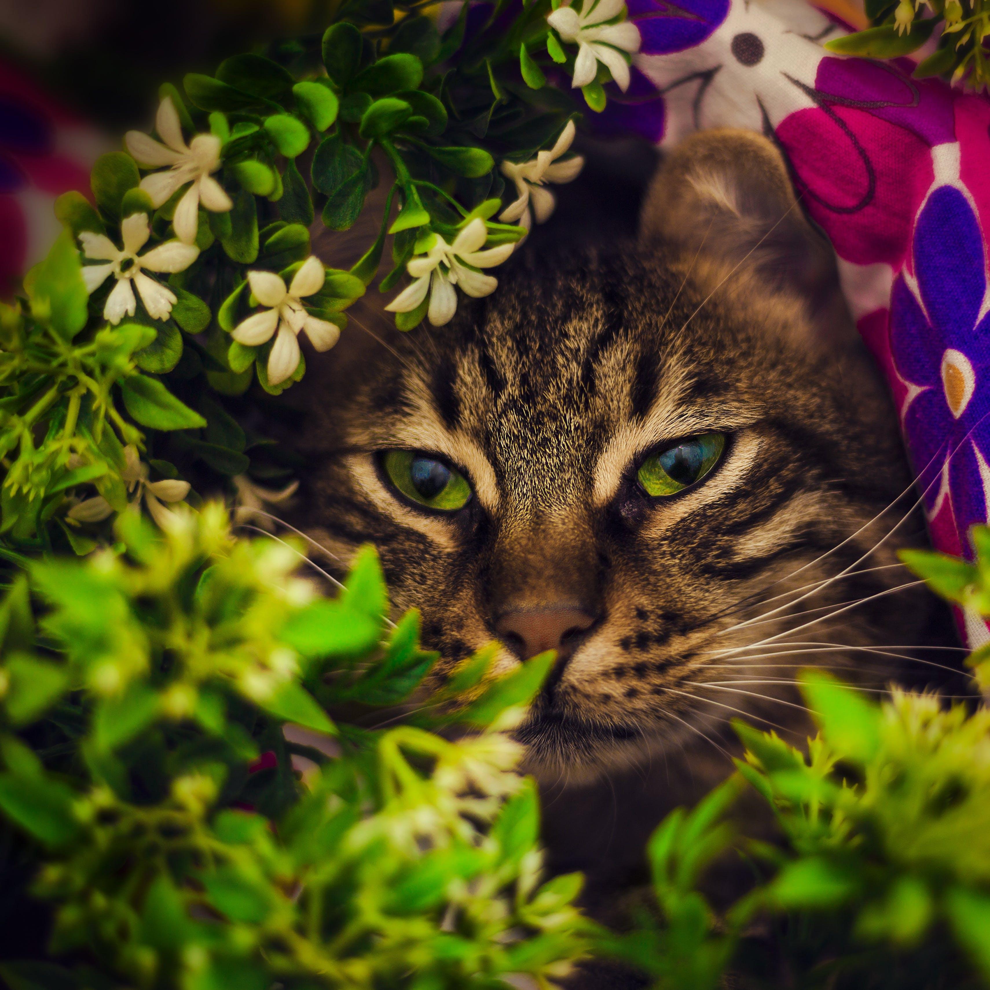 Free stock photo of animal, pet, cute, animals