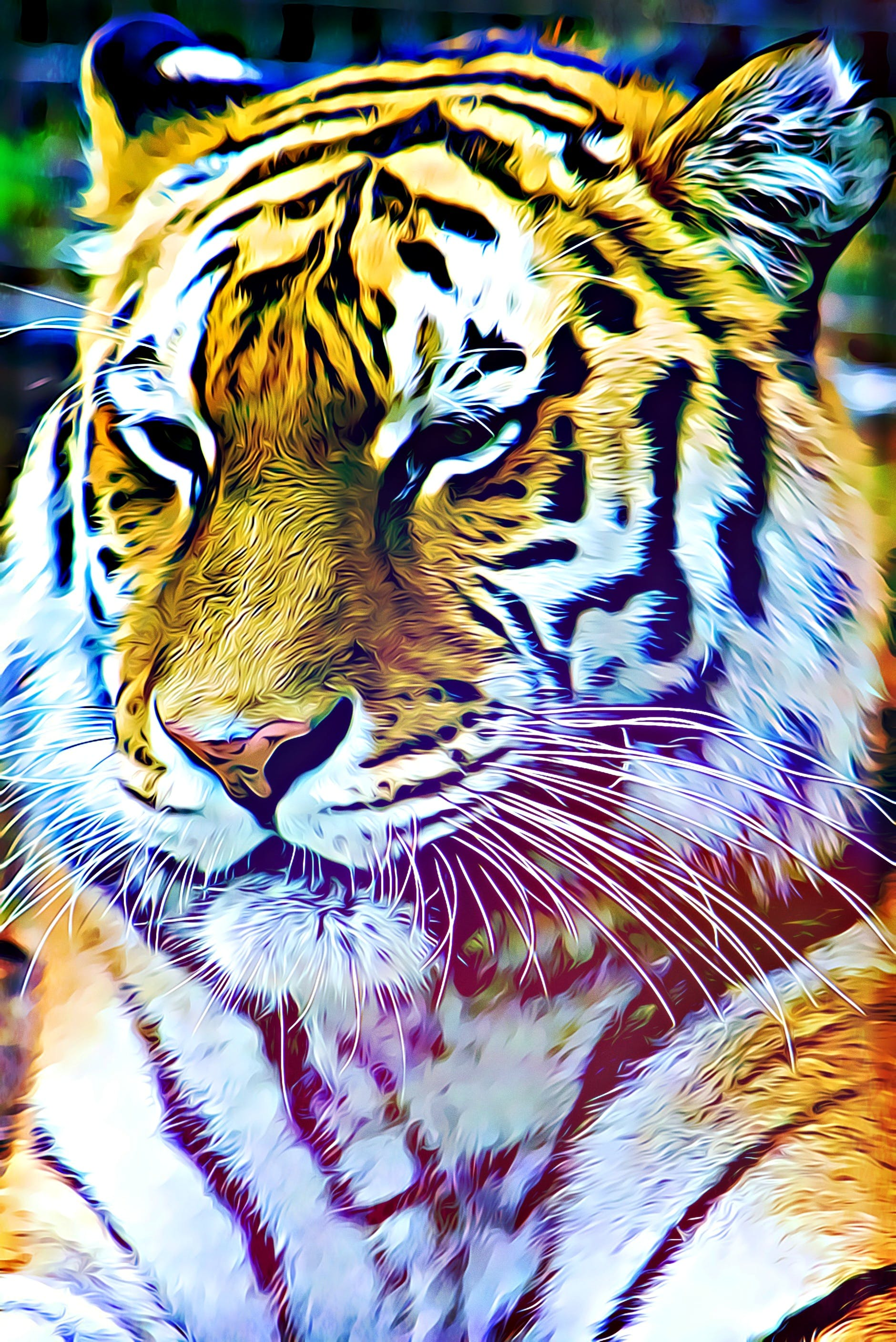 Free stock photo of nature, animal, tiger, color