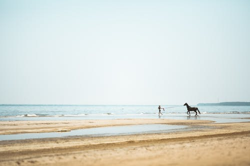 Foto profissional grátis de à beira-mar, animal, animal de estimação, ao ar livre