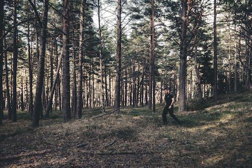 Imagine de stoc gratuită din arbori, bărbat, codru
