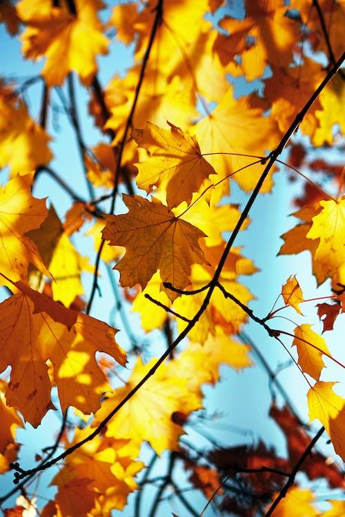 Photo of Autumn Leaves