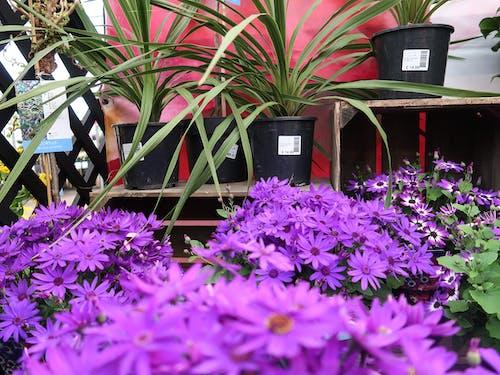 Photos gratuites de été, fleurs, vert, violet