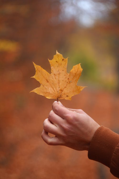 季節, 宏觀, 秋天的心情, 秋季 的 免費圖庫相片