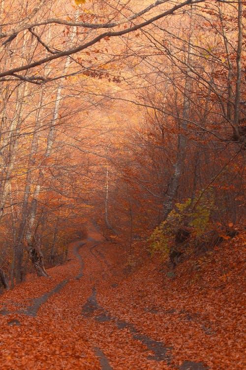 Fotos de stock gratuitas de al aire libre, amanecer, árboles desnudos, belleza de la naturaleza