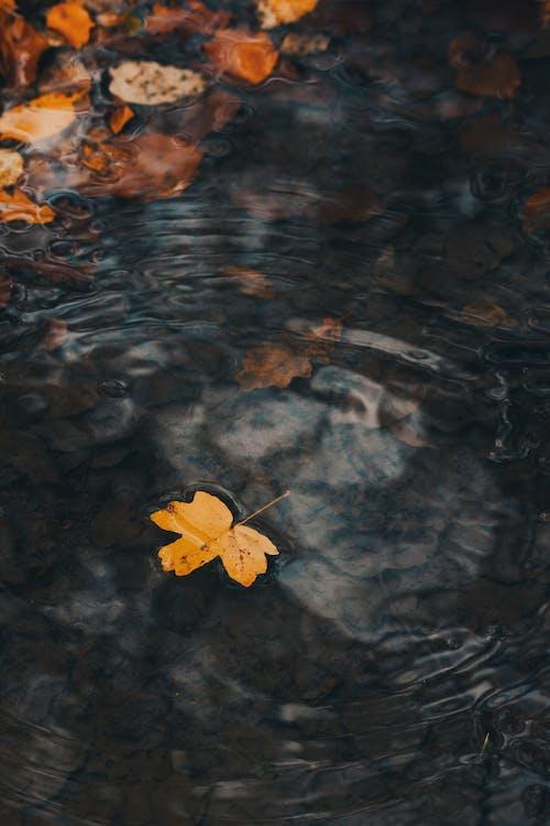 墮落, 平靜, 枯葉, 水 的 免費圖庫相片