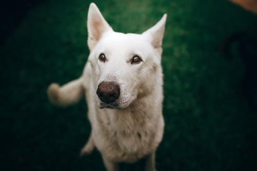 Selective Focus Photo Of White Dog