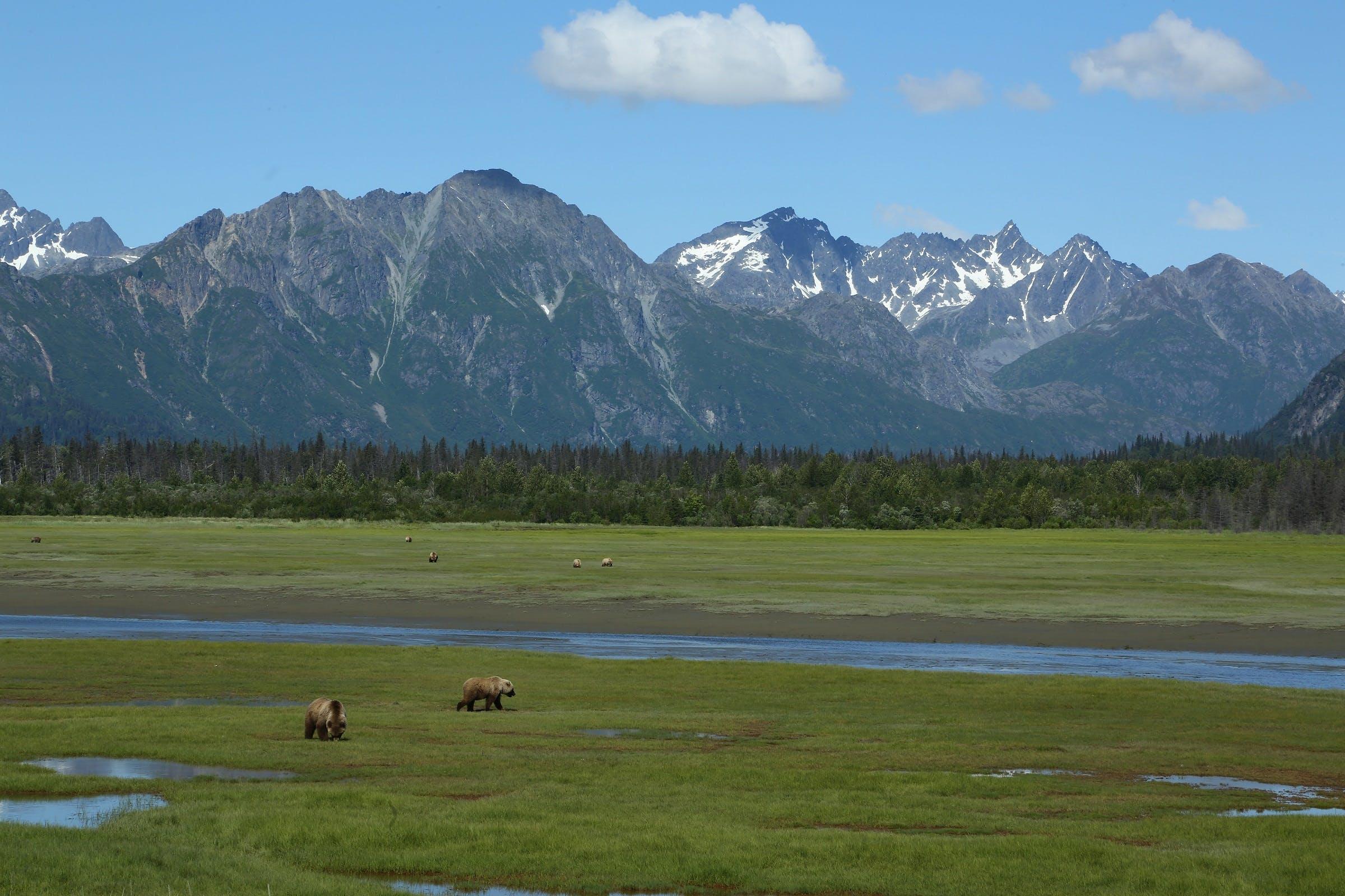 Gratis lagerfoto af bakke, bjerg, brune bjørne, dagslys