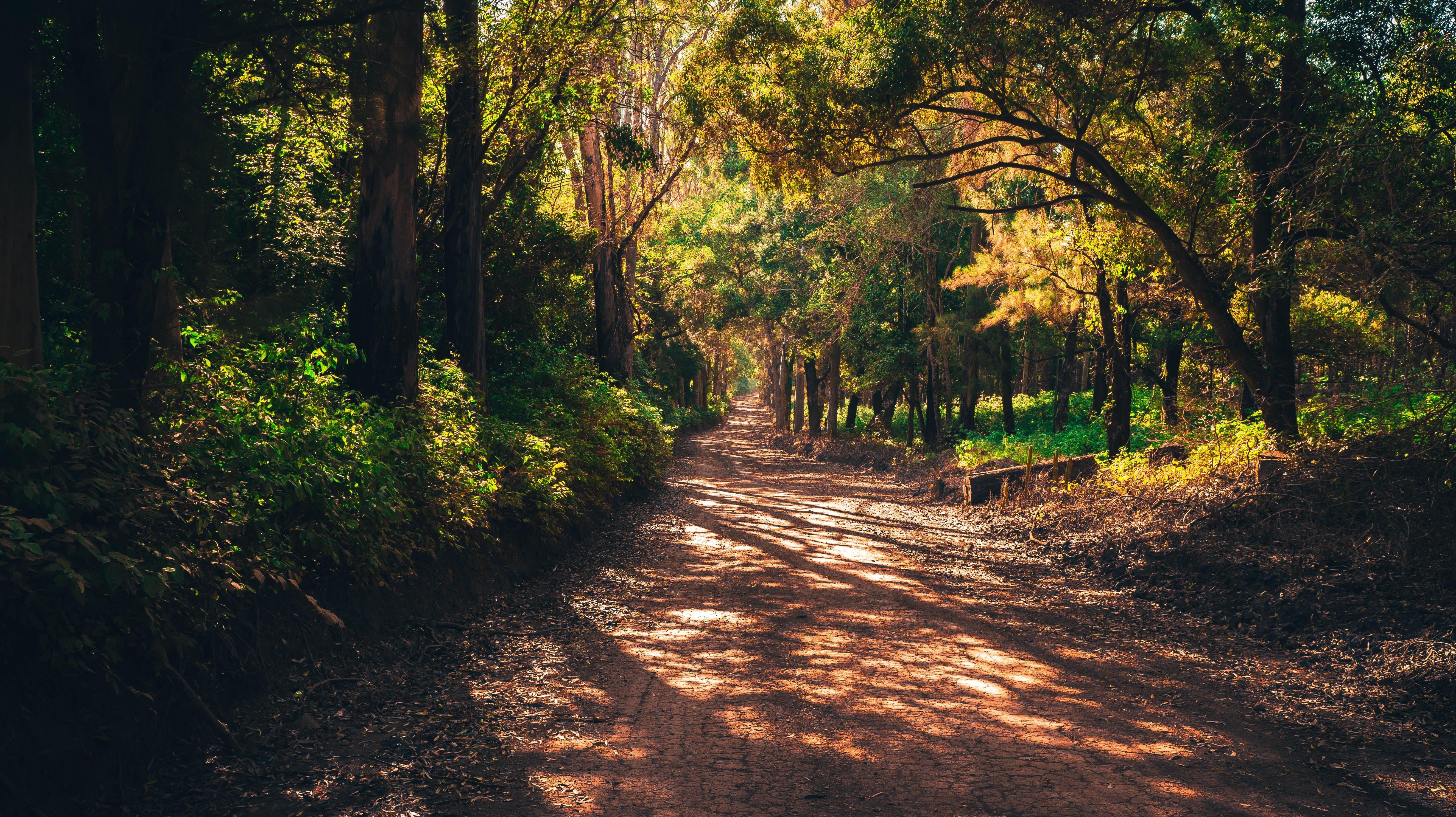 Základová fotografie zdarma na téma cesta, chodník, denní světlo, kmeny stromů