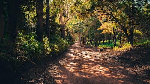 Gratis stockfoto met begeleiding, bomen, Boomstammen, Bos