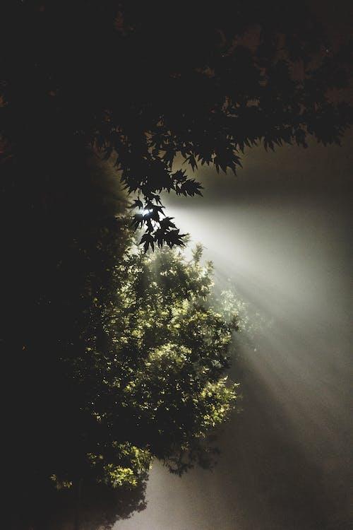 Foto stok gratis bayangan hitam, cahaya dan bayangan, cahaya matahari, cuaca cerah
