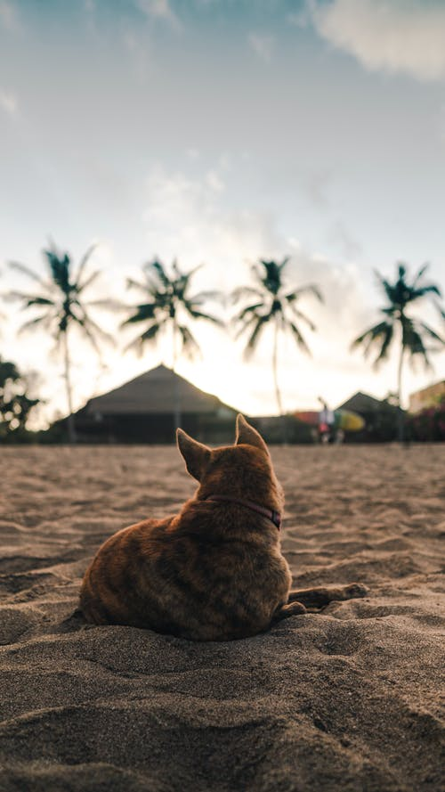 Brown Dog Lying on Sand