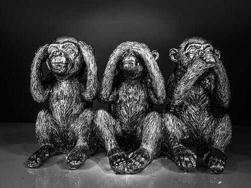 三隻猴子, 猴子, 真相, 道德 的 免費圖庫相片