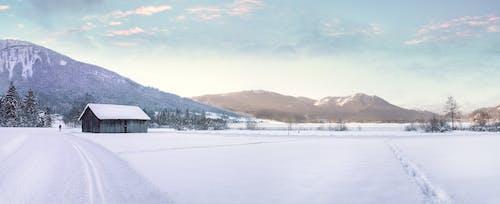 감기, 겨울, 경치, 경치가 좋은의 무료 스톡 사진