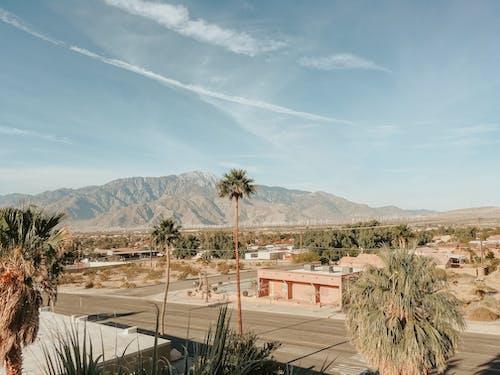 オアシス, カリフォルニア, サボテン, ドライの無料の写真素材