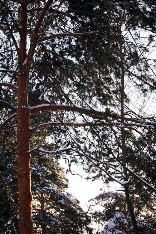 Gratis lagerfoto af skov, sne, solskin, vinter