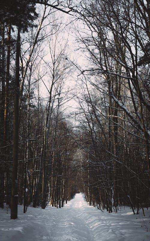 Gratis lagerfoto af skov, vej, vinter, vinterlandskab