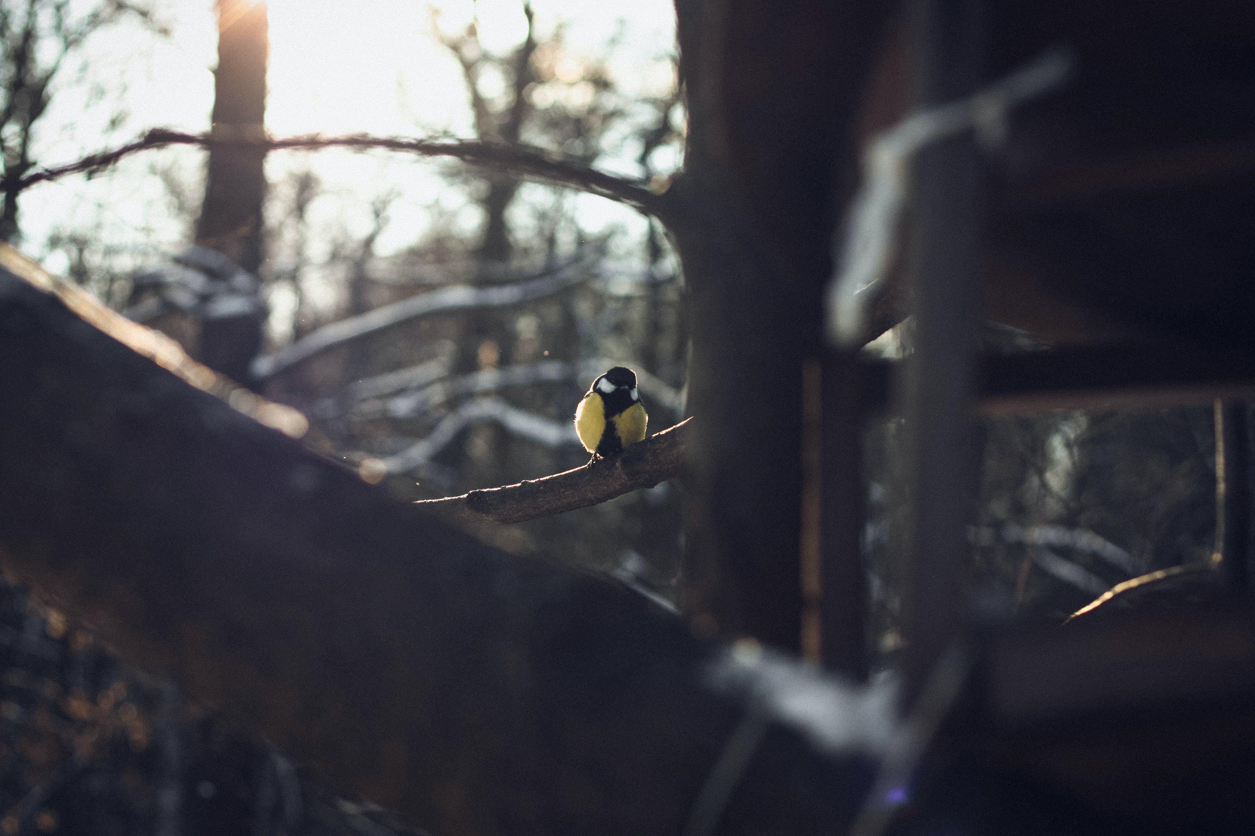 Free stock photo of bird, bird house, sunshine, winter
