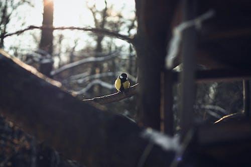 Gratis lagerfoto af fuglehus, solskin, vinter
