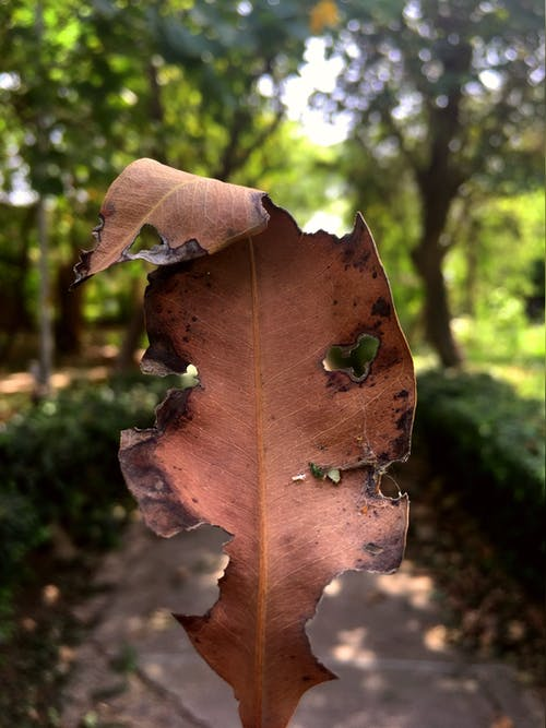 Free stock photo of autumn, dry leaf, fall leaf, nature