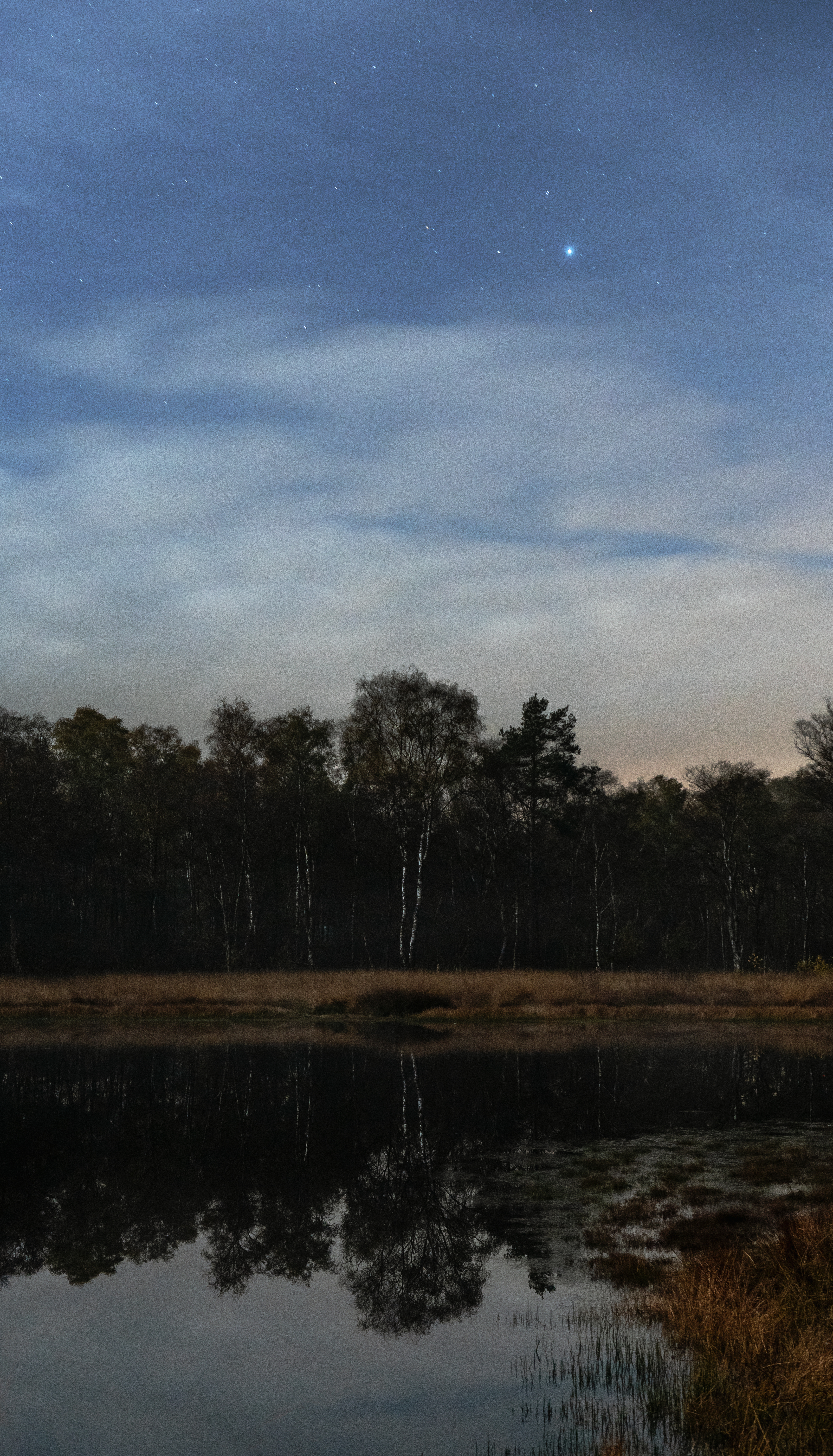 Body of Water and Trees Under A Blue Sky