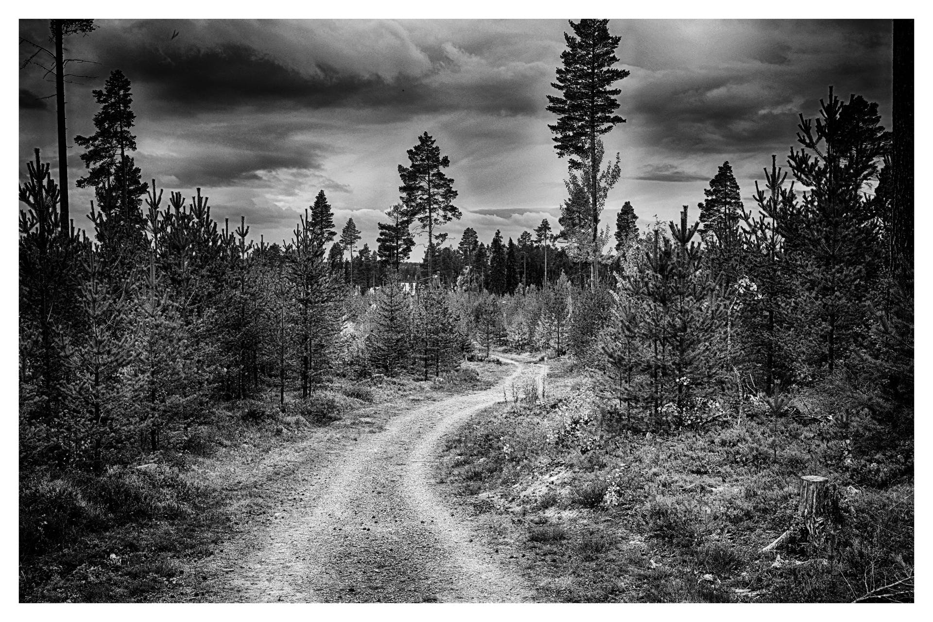 Free stock photo of black-and-white, nature, sky, forest