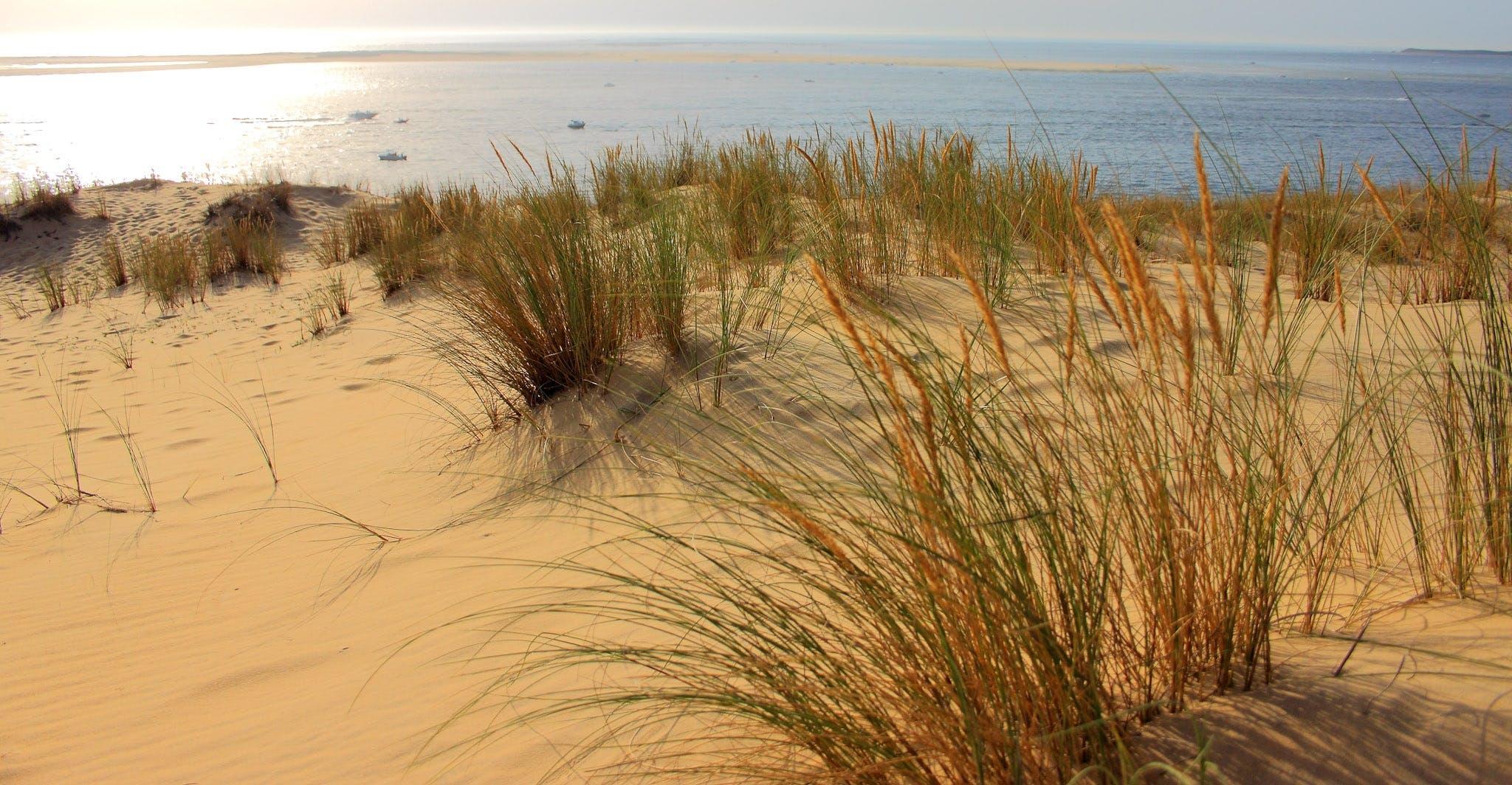 Free stock photo of atlantic coast, beach, dune, dune pyla you
