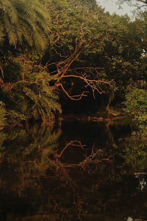 göl, Su içeren Ücretsiz stok fotoğraf