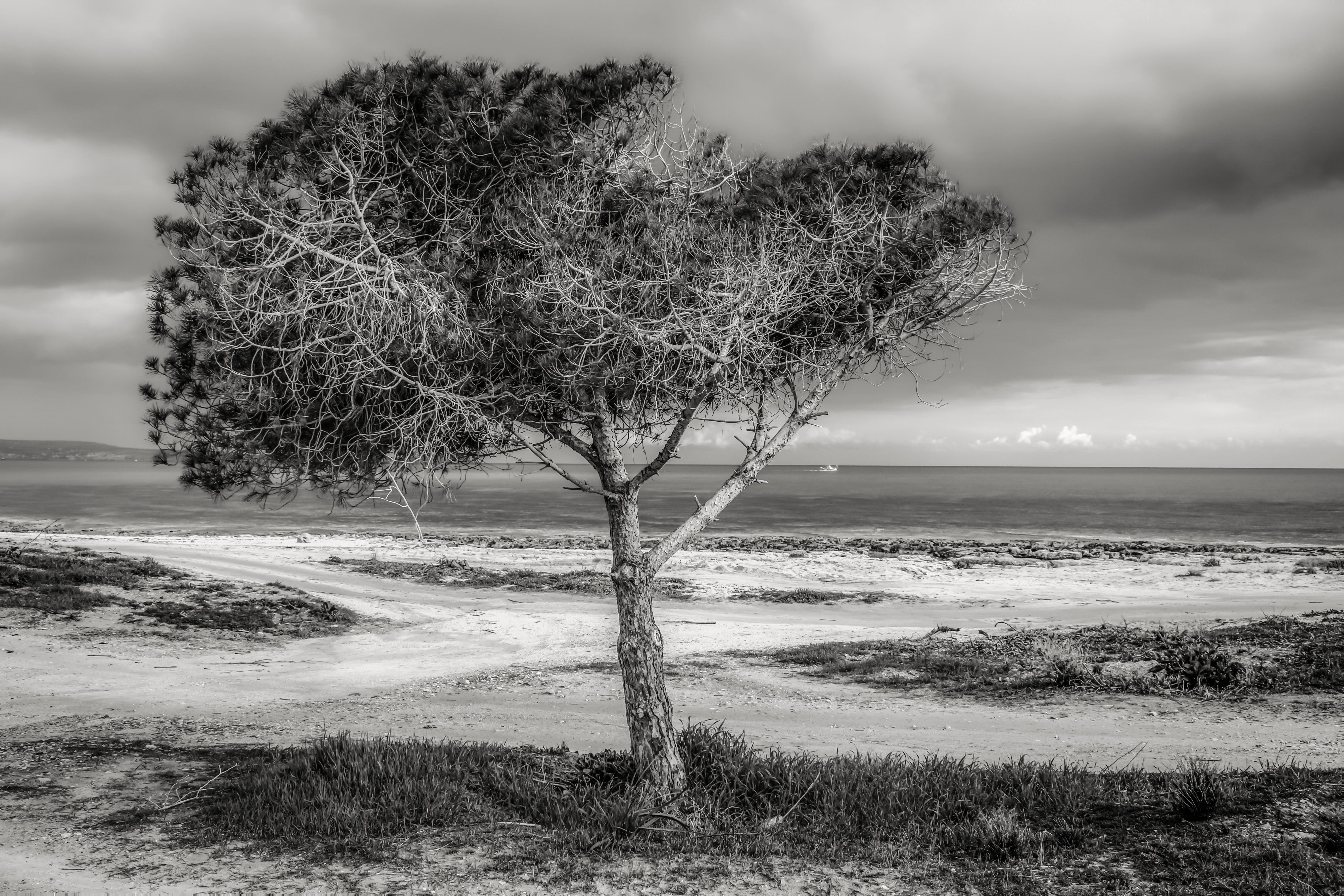 冬季, 冷靜, 反射, 和平的 的 免費圖庫相片