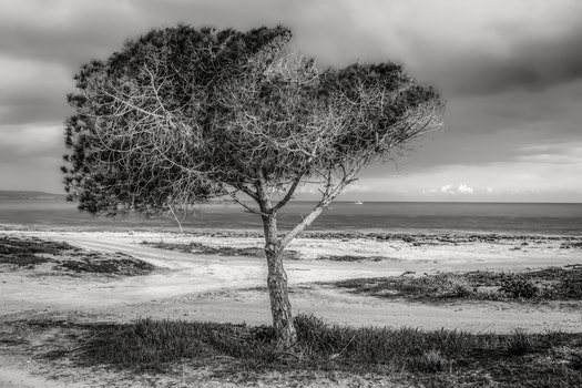 Tree on Beach Against Sky