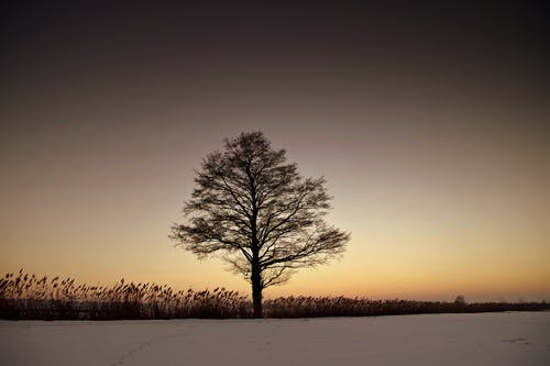 Foto d'estoc gratuïta de alba, arbre, boira, brillar