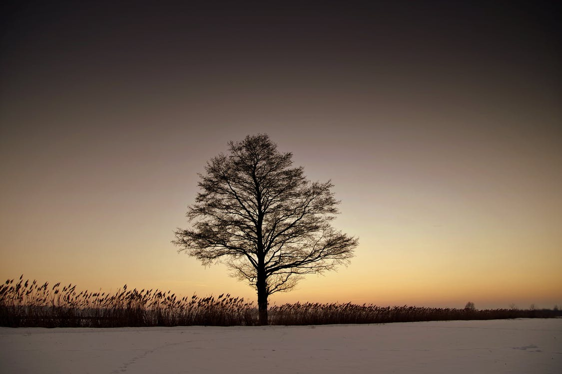 Silhouette Bare Tree on Landscape Against Sky during Sunset