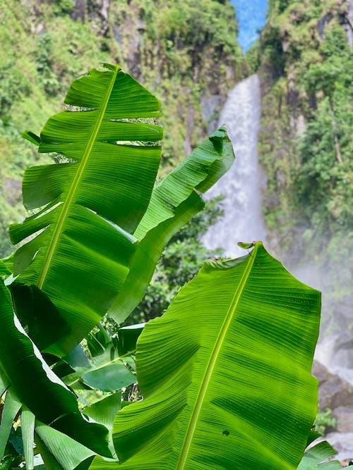 Free stock photo of banana leaves, blue, caribbean, caribbean island
