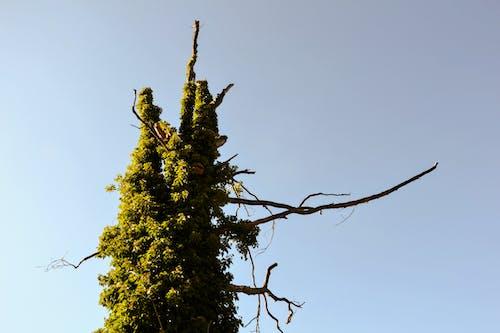 Fotos de stock gratuitas de árbol desnudo, lago
