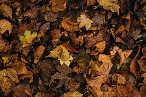 Ilmainen kuvapankkikuva tunnisteilla kuivat lehdet, kuvio, pudonneet lehdet, putoaminen