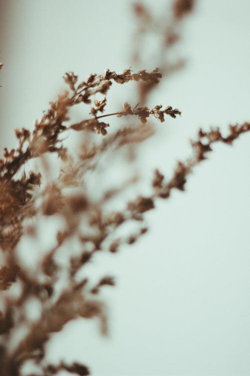 갈색 잎 식물