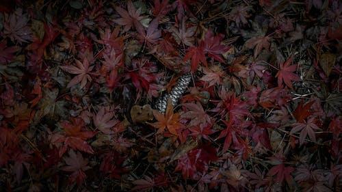 Fotobanka sbezplatnými fotkami na tému 4k tapety, jesenná nálada, jesenné lístie