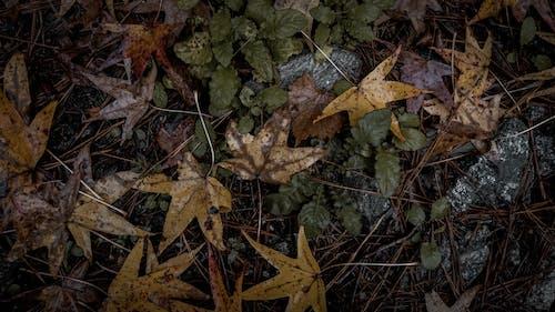 Fotobanka sbezplatnými fotkami na tému 4k tapety, jesenná nálada, jesenný les