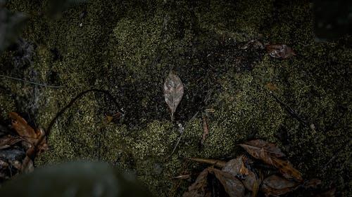 Fotobanka sbezplatnými fotkami na tému 4k tapety, jesenná nálada, list