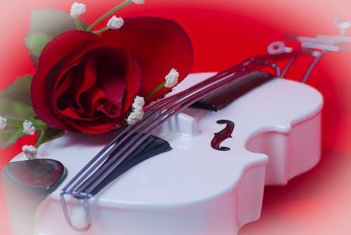 Gratis lagerfoto af violin