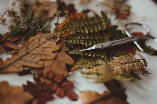 Scissors on Dry Leaves