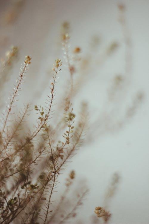 Brown Flower Plant
