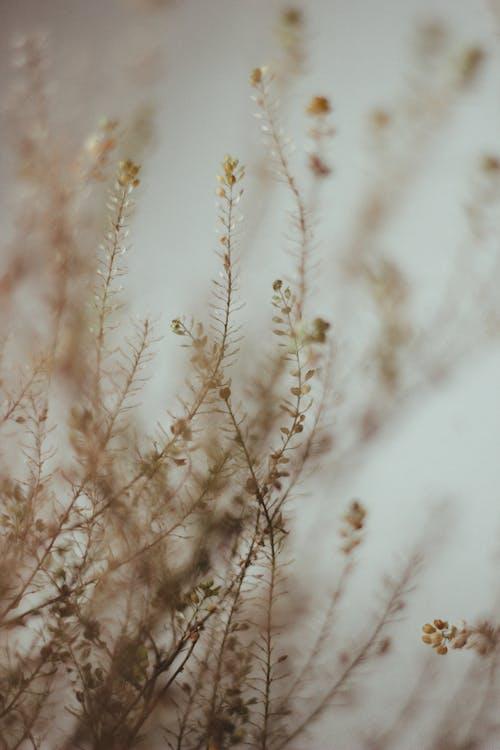 Ilmainen kuvapankkikuva tunnisteilla epätarkka tausta, kasvaa, kasvaminen, kasvi