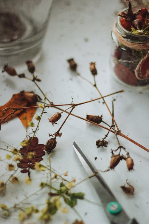 Brown Withered Flowers
