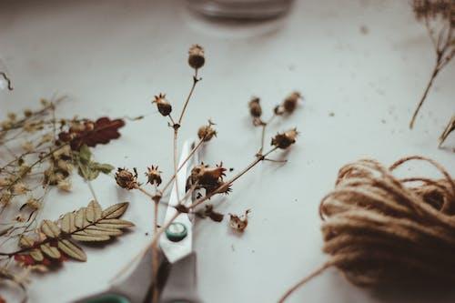 Brown Dried Flowers