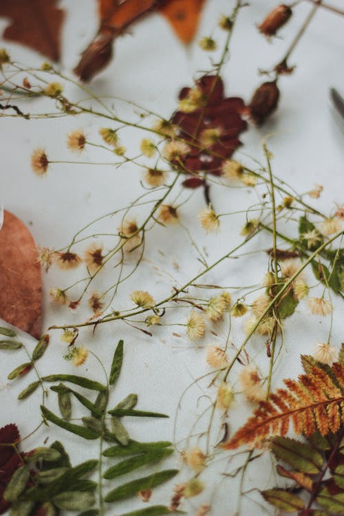 Free stock photo of dry leaves, wildflower