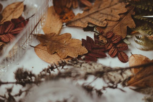 Withered Leaves on White Surface