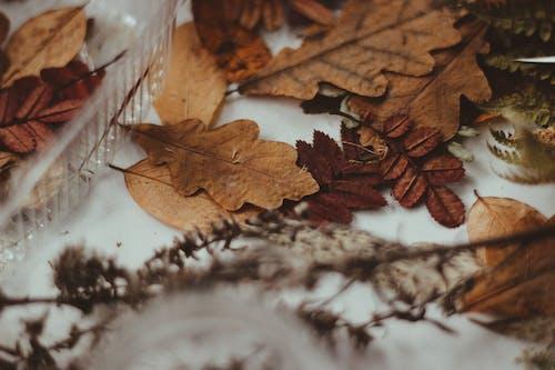 Gratis stockfoto met bladeren, droge bladeren, herfst, omvallen