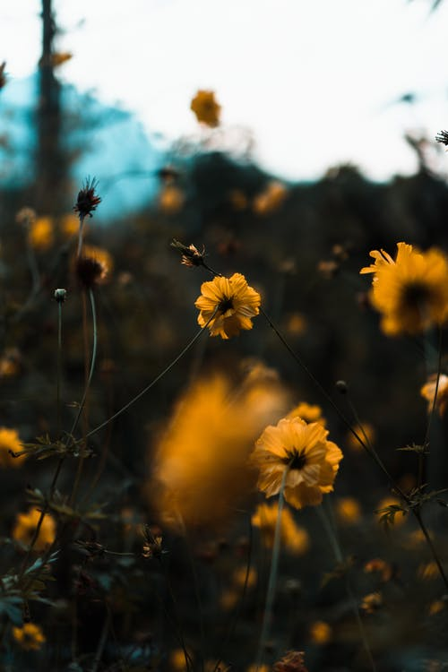 Free stock photo of beautiful, beautiful flower, flower, flowers